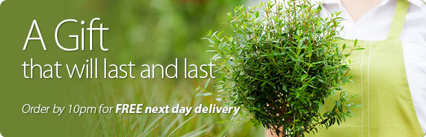 Plant delivery in UK